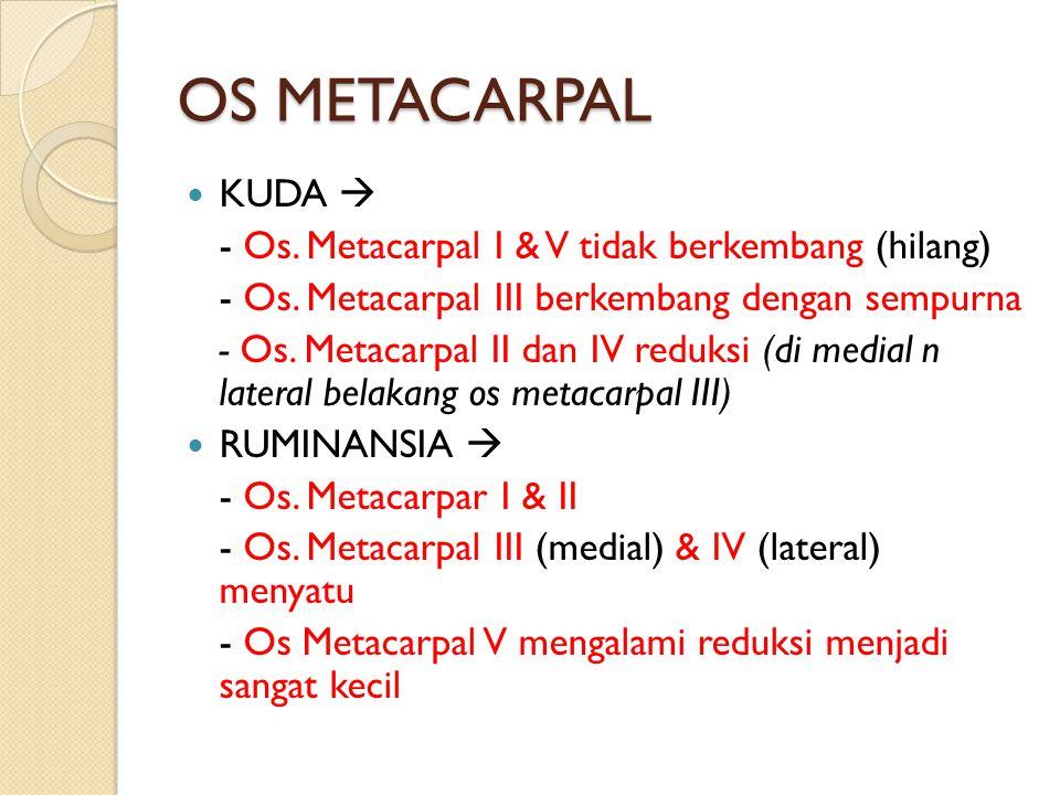 OS METACARPAL KUDA  - Os. Metacarpal I & V tidak berkembang (hilang)