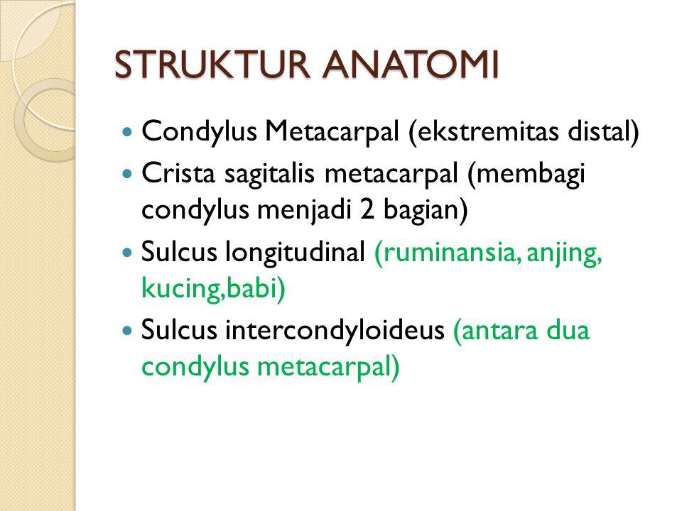 STRUKTUR ANATOMI Condylus Metacarpal (ekstremitas distal)