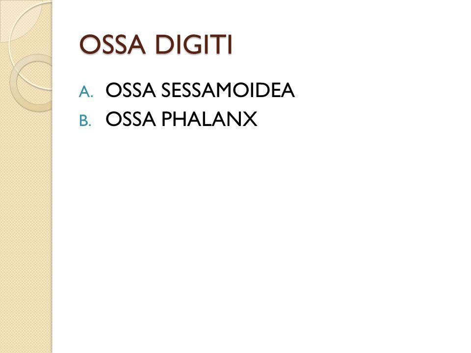 OSSA DIGITI OSSA SESSAMOIDEA OSSA PHALANX