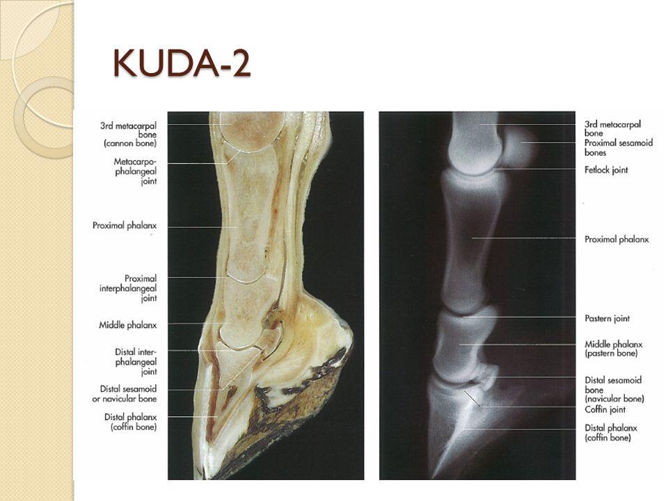 KUDA-2