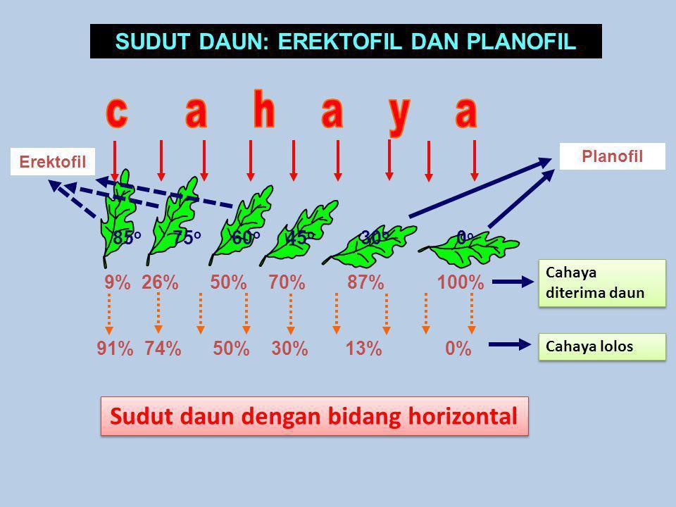SUDUT DAUN: EREKTOFIL DAN PLANOFIL Sudut daun dengan bidang horizontal