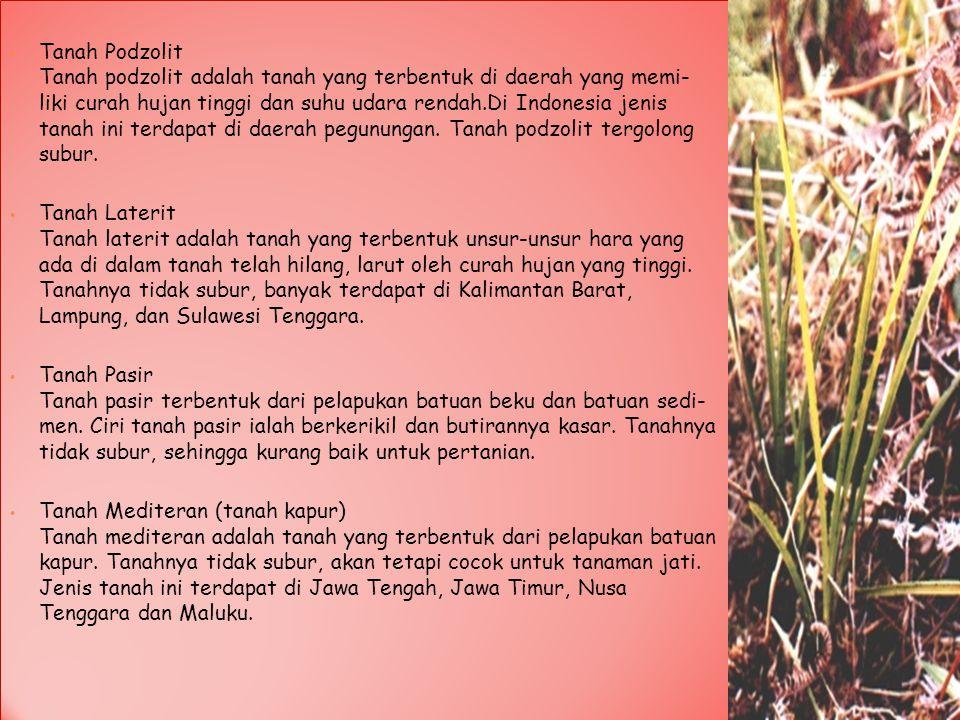 Tanah Podzolit Tanah podzolit adalah tanah yang terbentuk di daerah yang memi- liki curah hujan tinggi dan suhu udara rendah.Di Indonesia jenis tanah ini terdapat di daerah pegunungan. Tanah podzolit tergolong subur.