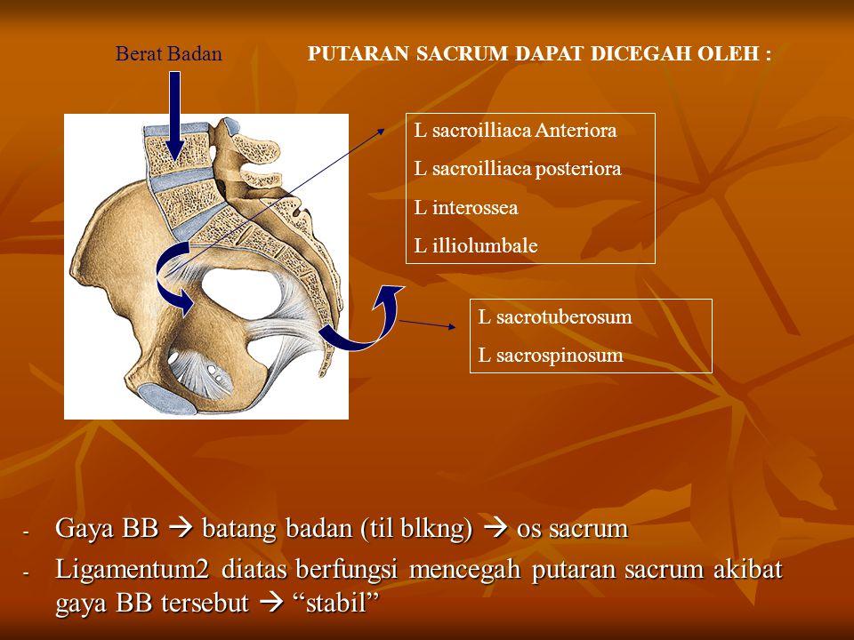Gaya BB  batang badan (til blkng)  os sacrum