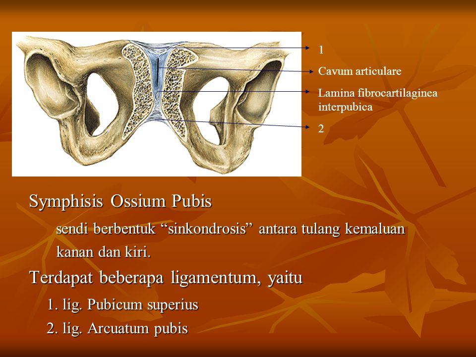 Symphisis Ossium Pubis
