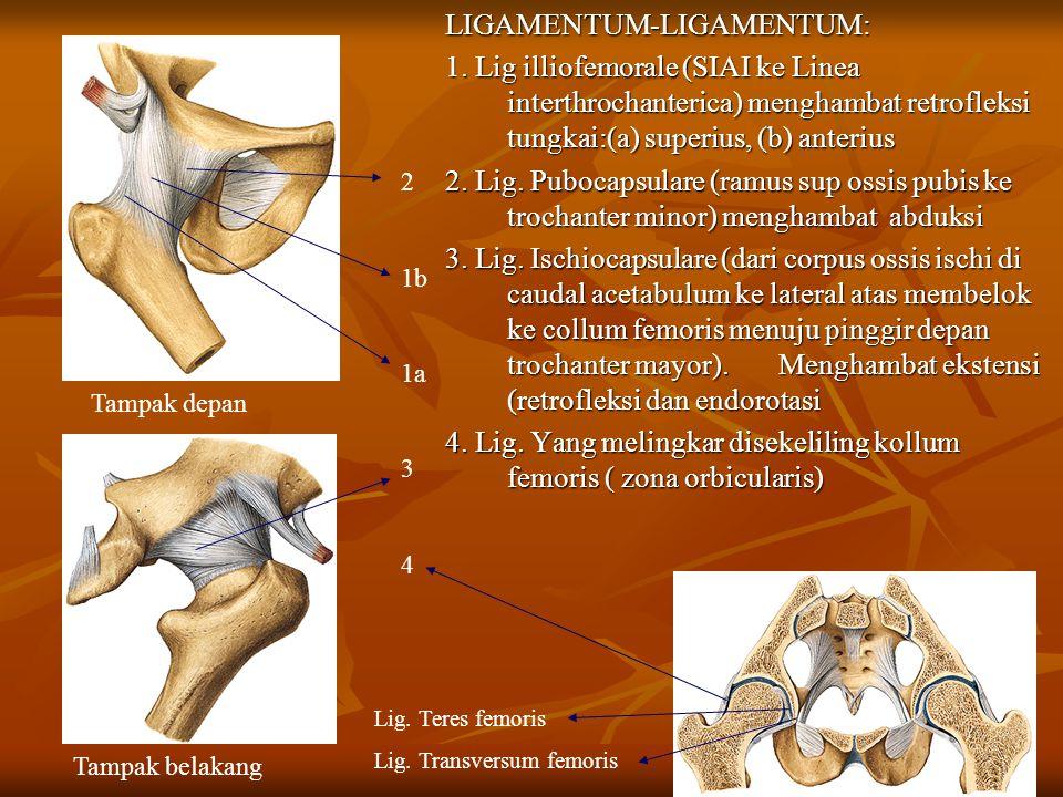 LIGAMENTUM-LIGAMENTUM: