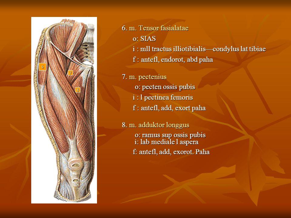 o: ramus sup ossis pubis