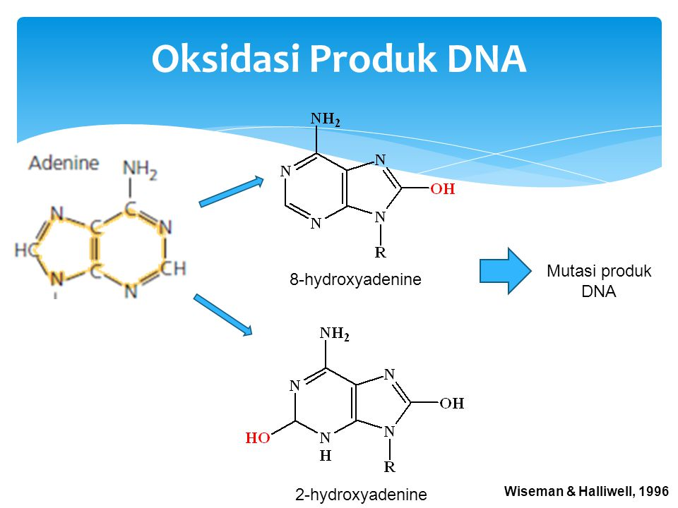 Oksidasi Produk DNA Mutasi produk DNA 8-hydroxyadenine