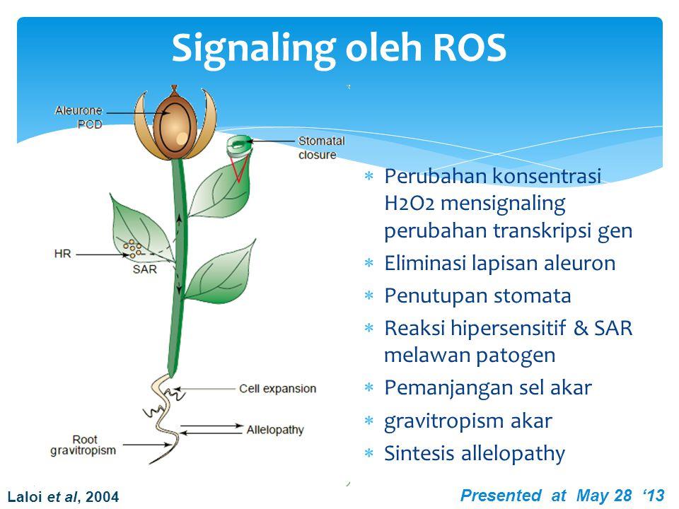 Signaling oleh ROS Perubahan konsentrasi H2O2 mensignaling perubahan transkripsi gen. Eliminasi lapisan aleuron.