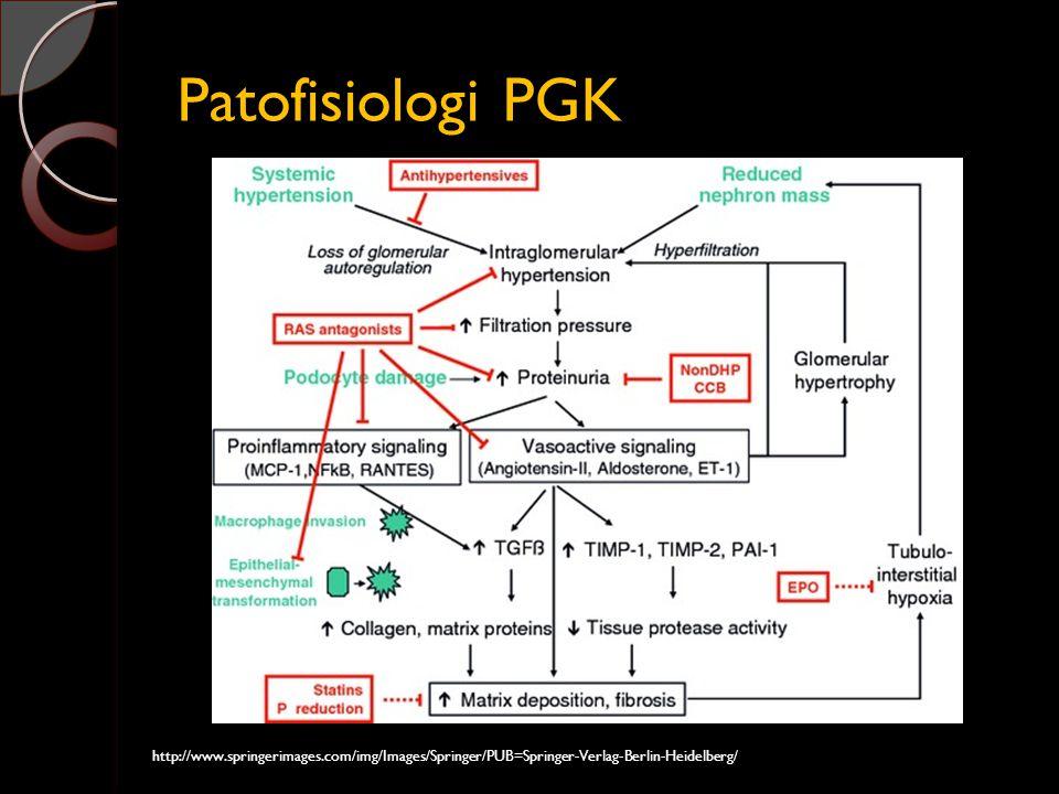 Patofisiologi PGK http://www.springerimages.com/img/Images/Springer/PUB=Springer-Verlag-Berlin-Heidelberg/
