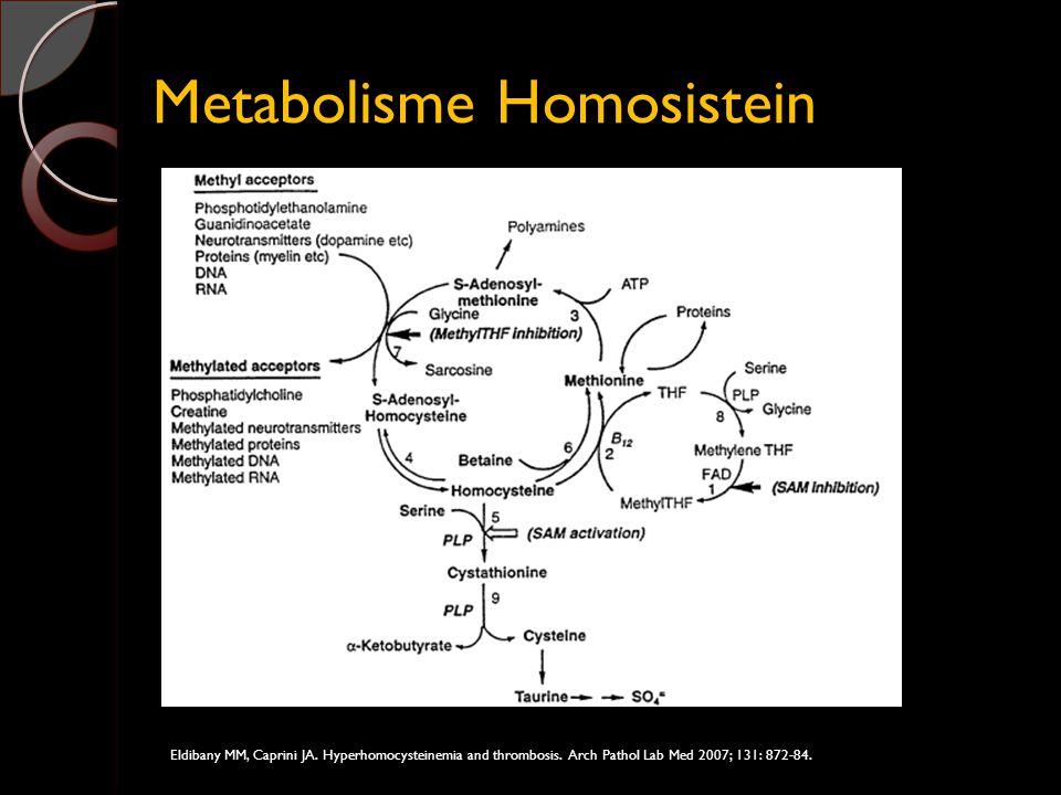Metabolisme Homosistein