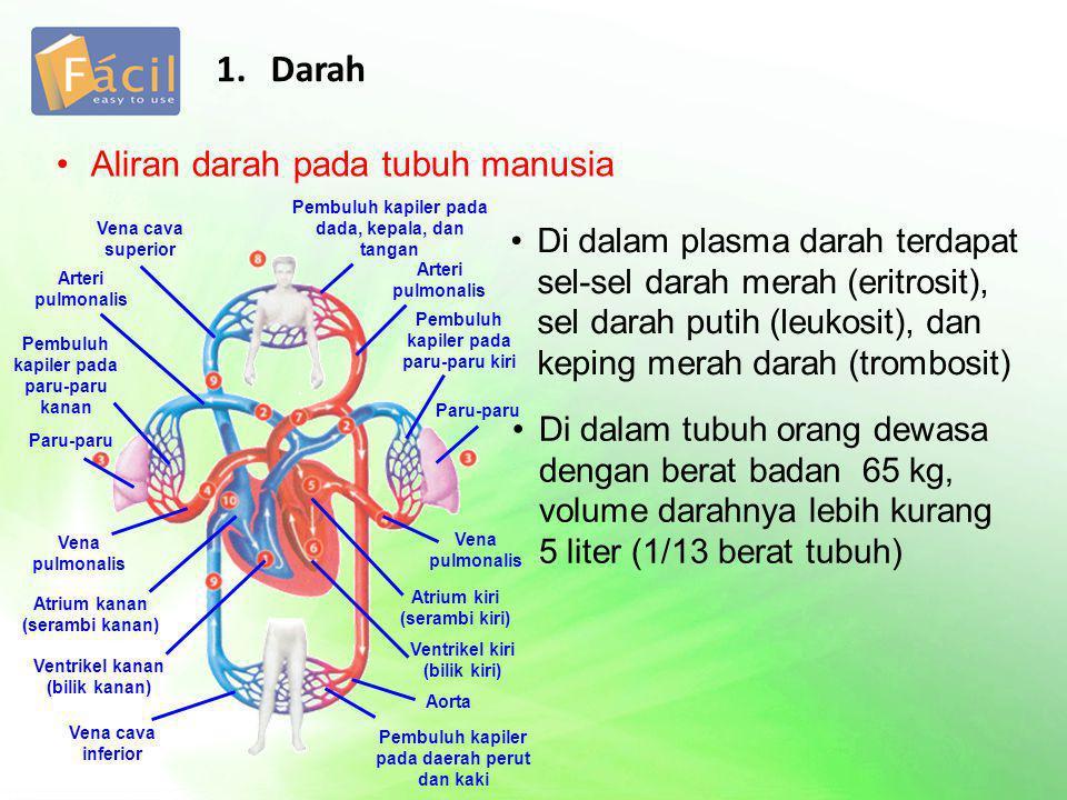 1. Darah Aliran darah pada tubuh manusia