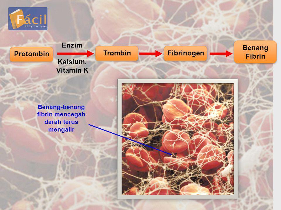 Benang-benang fibrin mencegah darah terus mengalir