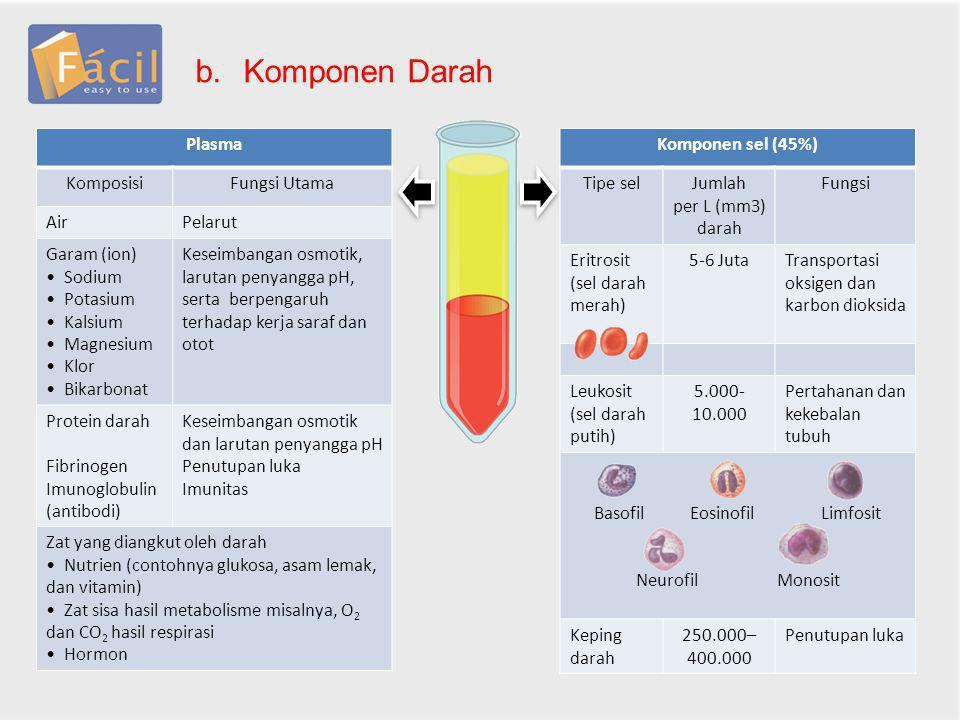 Basofil Eosinofil Limfosit