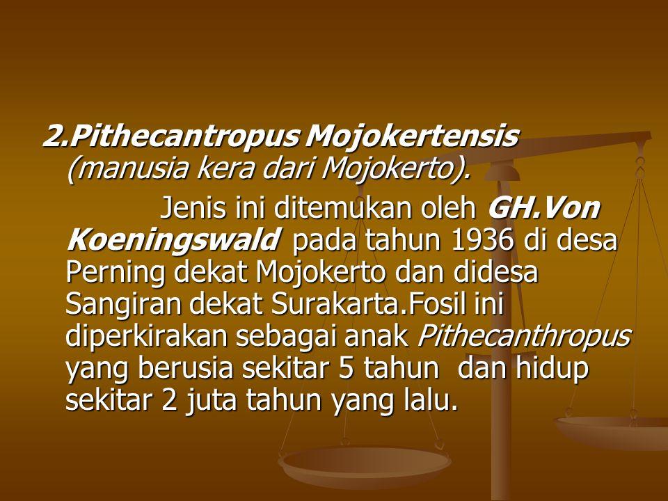 2.Pithecantropus Mojokertensis (manusia kera dari Mojokerto).