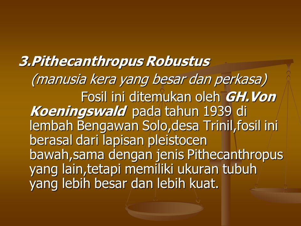 3.Pithecanthropus Robustus