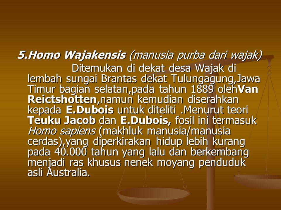 5.Homo Wajakensis (manusia purba dari wajak)