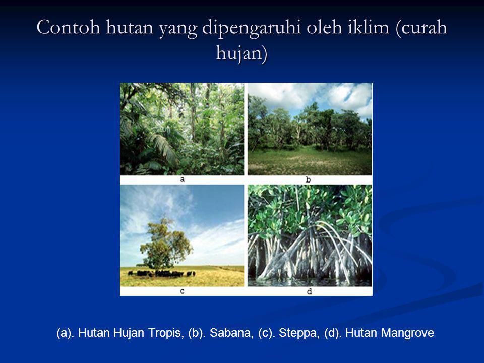 Contoh hutan yang dipengaruhi oleh iklim (curah hujan)