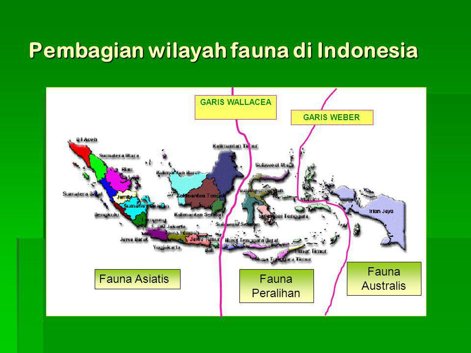 Pembagian wilayah fauna di Indonesia