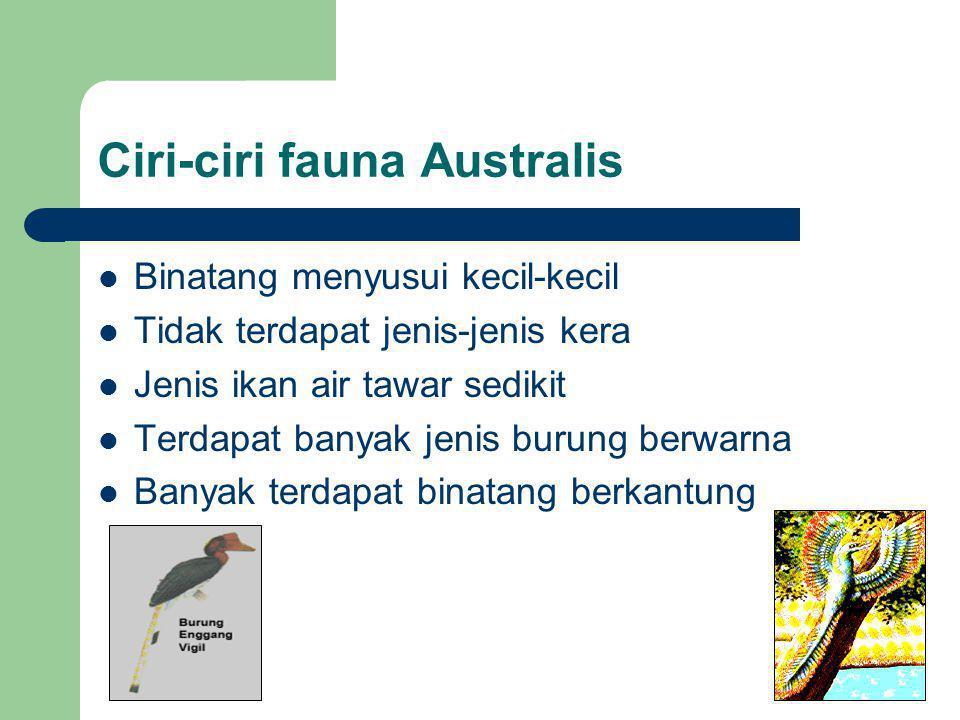 Ciri-ciri fauna Australis