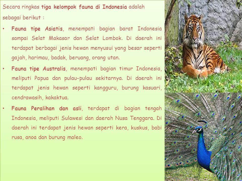 Secara ringkas tiga kelompok fauna di Indonesia adalah