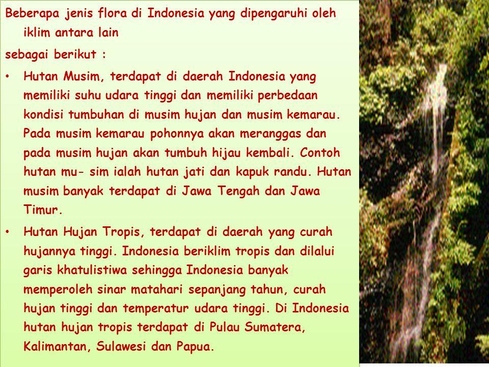 Beberapa jenis flora di Indonesia yang dipengaruhi oleh iklim antara lain