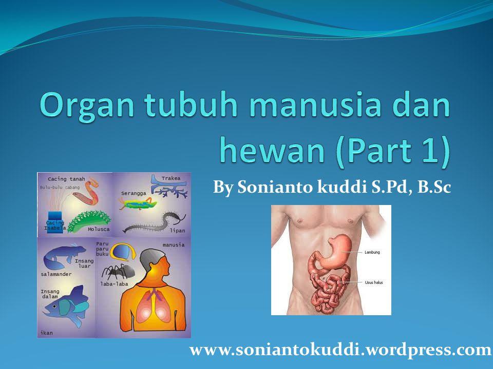 Organ tubuh manusia dan hewan (Part 1)