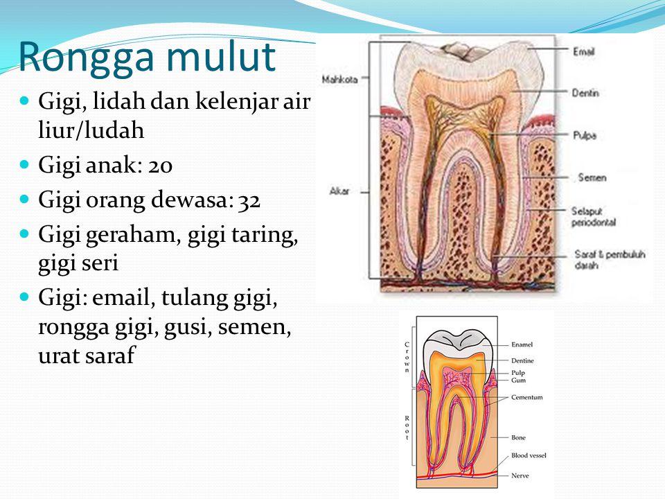 Rongga mulut Gigi, lidah dan kelenjar air liur/ludah Gigi anak: 20