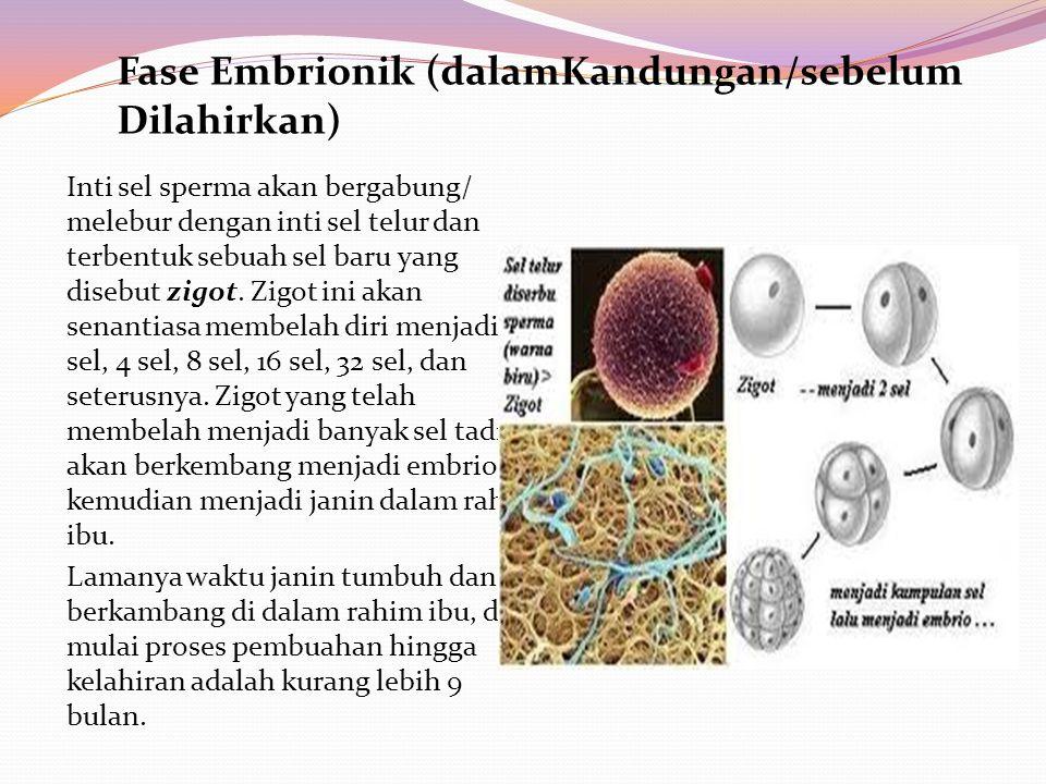 Fase Embrionik (dalamKandungan/sebelum Dilahirkan)