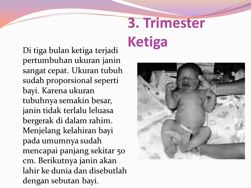 3. Trimester Ketiga