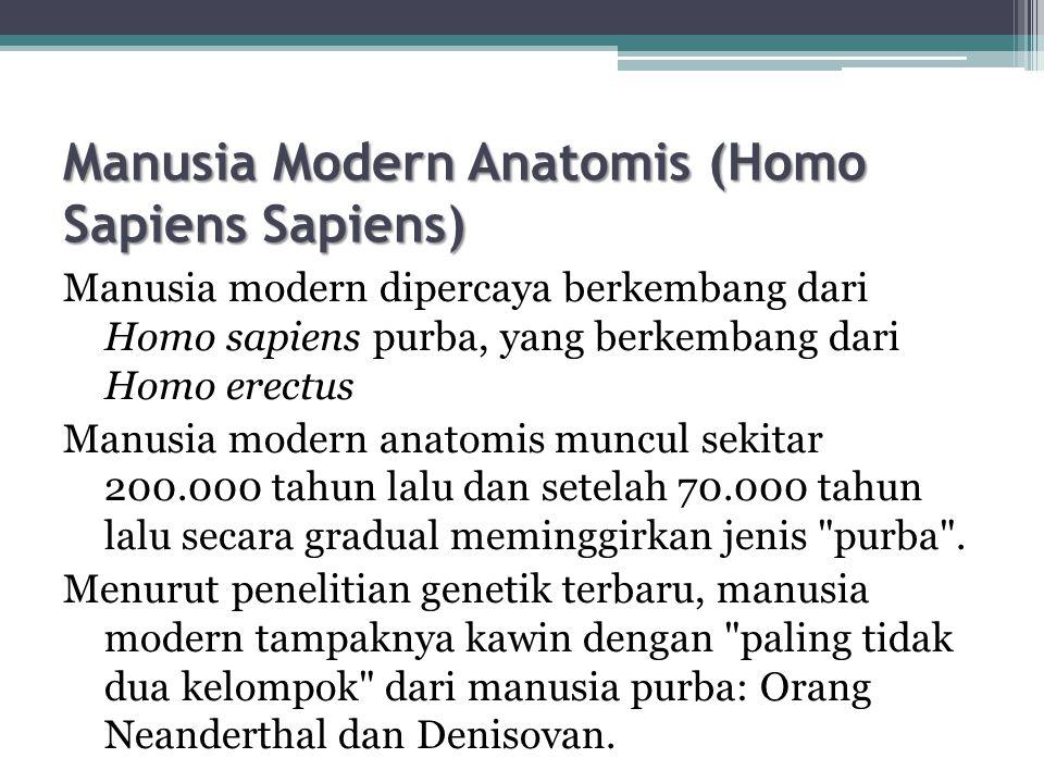 Manusia Modern Anatomis (Homo Sapiens Sapiens)