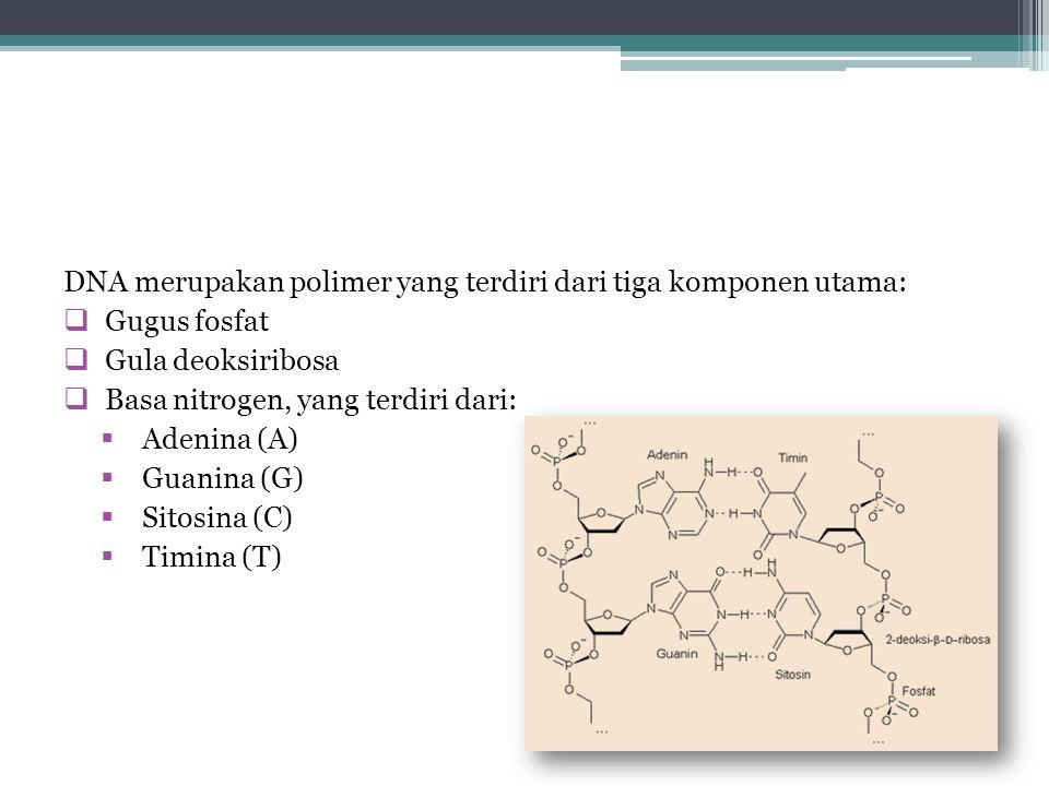 DNA merupakan polimer yang terdiri dari tiga komponen utama: