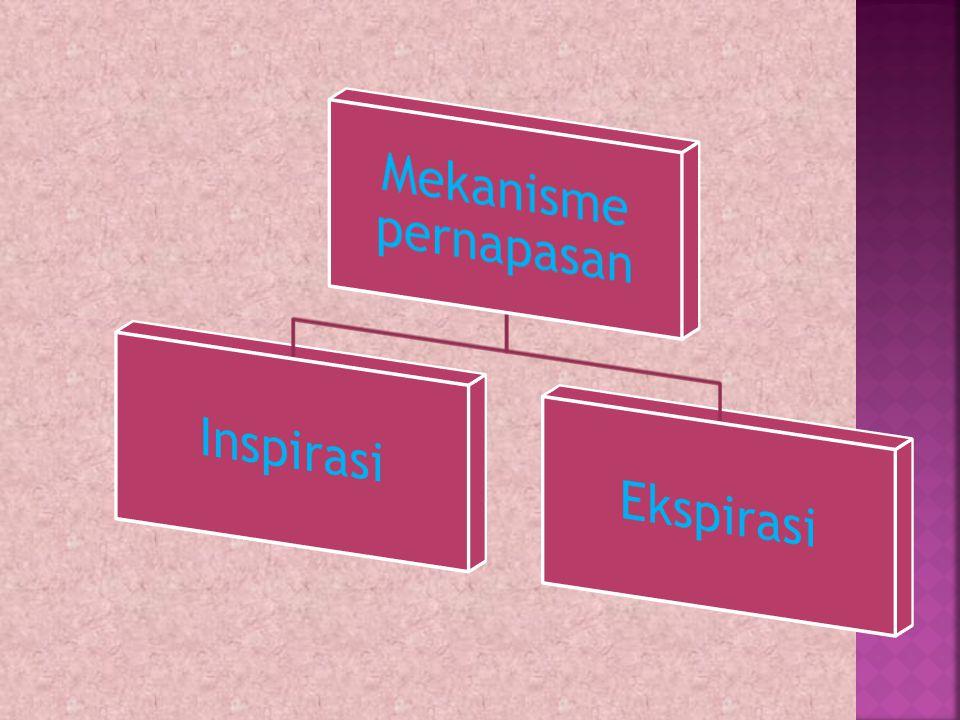 Mekanisme pernapasan Inspirasi Ekspirasi