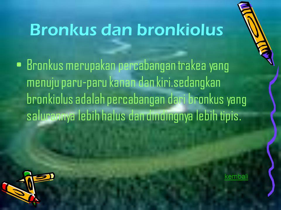 Bronkus dan bronkiolus