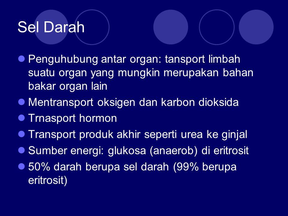 Sel Darah Penguhubung antar organ: tansport limbah suatu organ yang mungkin merupakan bahan bakar organ lain.