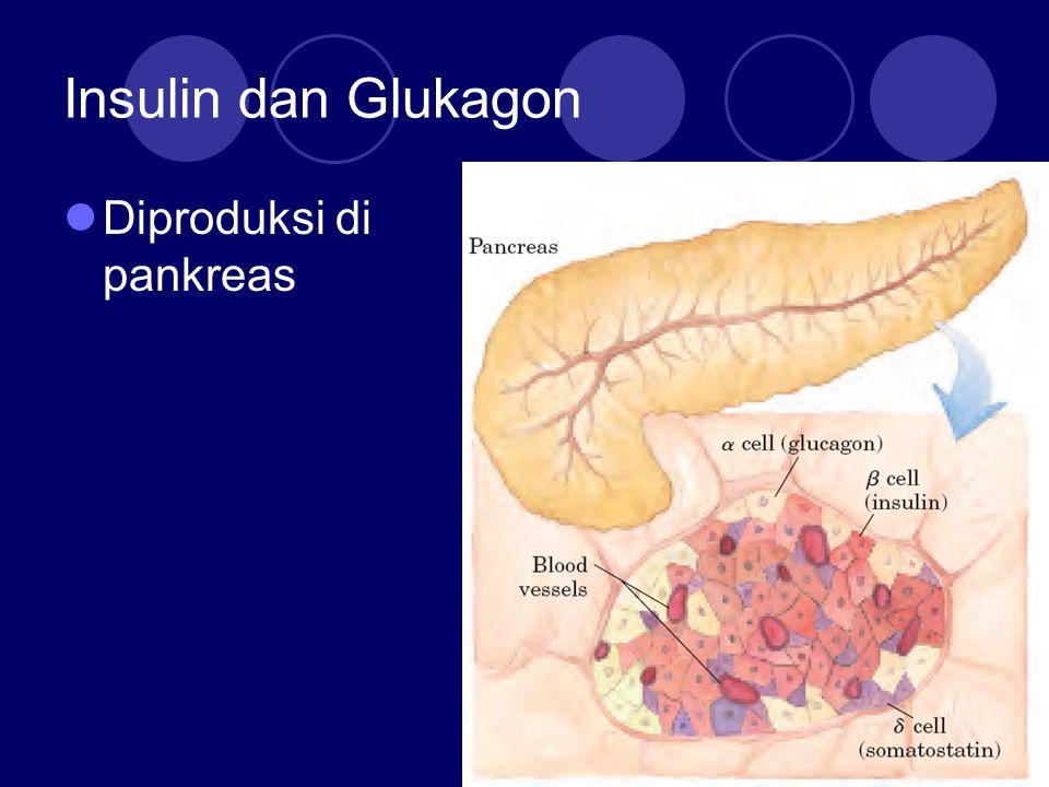 Insulin dan Glukagon Diproduksi di pankreas