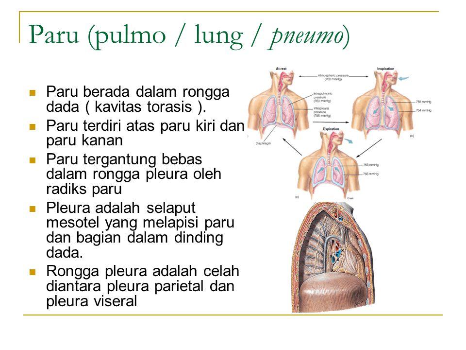 Paru (pulmo / lung / pneumo)