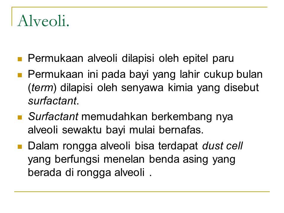 Alveoli. Permukaan alveoli dilapisi oleh epitel paru