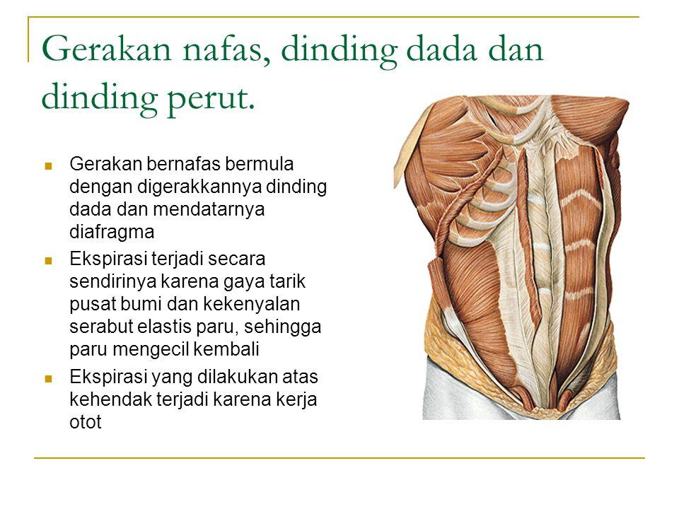 Gerakan nafas, dinding dada dan dinding perut.