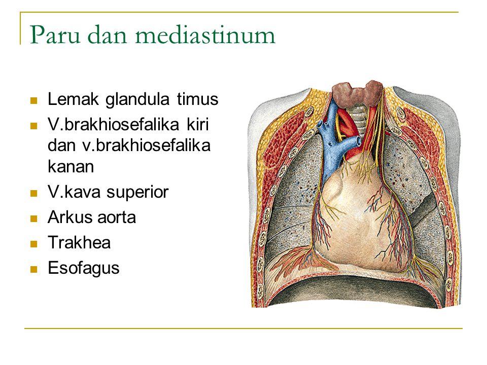 Paru dan mediastinum Lemak glandula timus