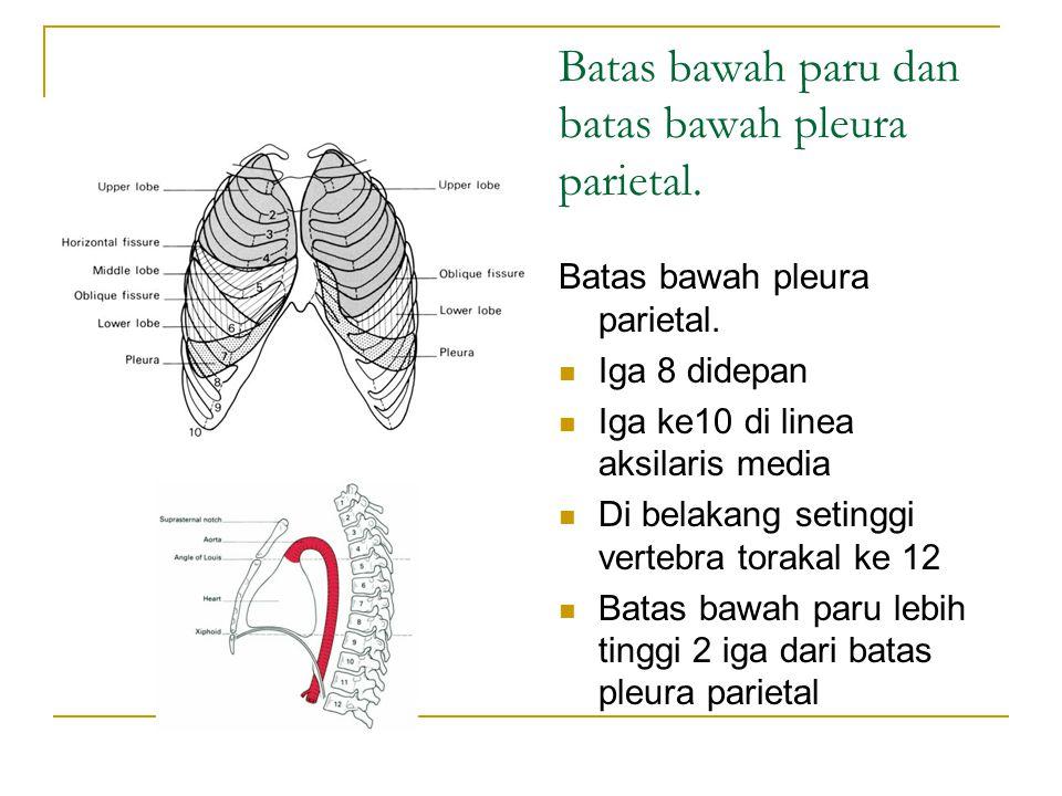 Batas bawah paru dan batas bawah pleura parietal.