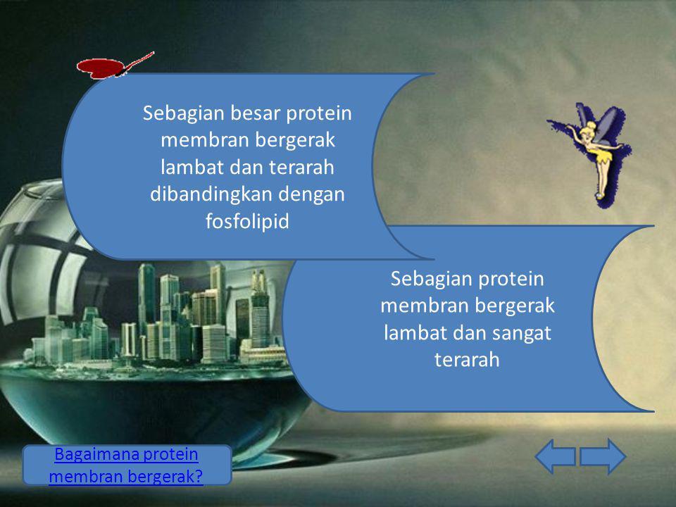 Sebagian protein membran bergerak lambat dan sangat terarah