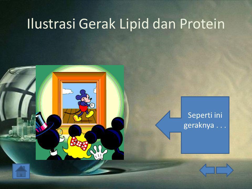 Ilustrasi Gerak Lipid dan Protein