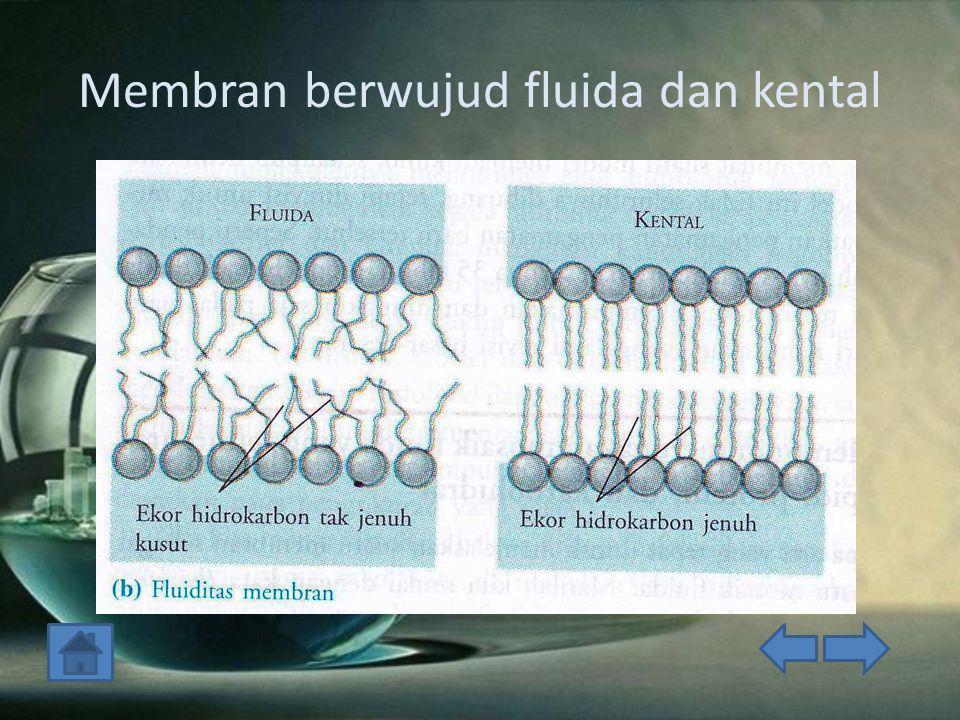 Membran berwujud fluida dan kental