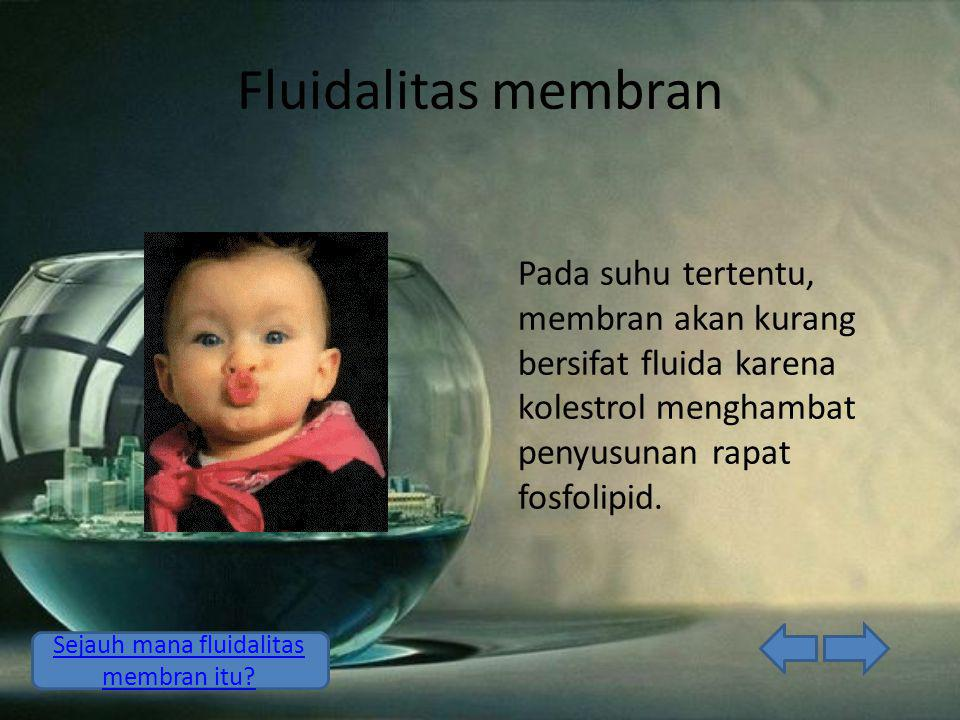 Sejauh mana fluidalitas membran itu