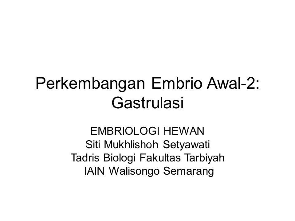 Perkembangan Embrio Awal-2: Gastrulasi