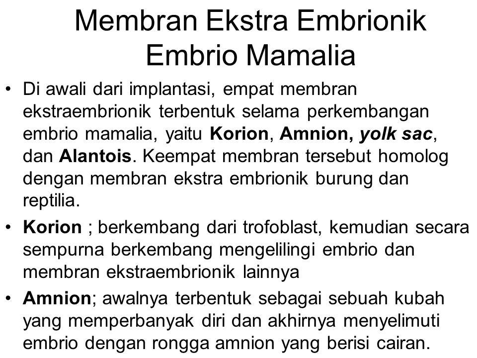 Membran Ekstra Embrionik Embrio Mamalia