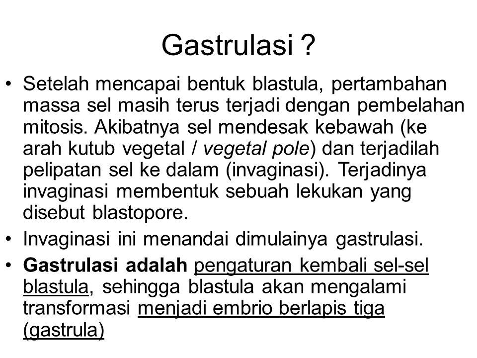 Gastrulasi