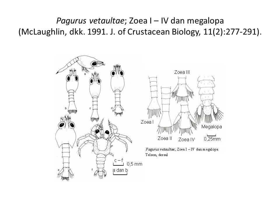 Pagurus vetaultae; Zoea I – IV dan megalopa (McLaughlin, dkk. 1991. J