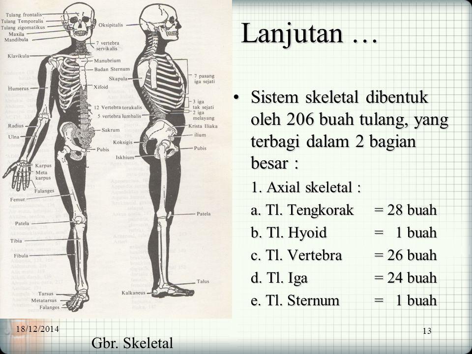 Lanjutan … Sistem skeletal dibentuk oleh 206 buah tulang, yang terbagi dalam 2 bagian besar : 1. Axial skeletal :
