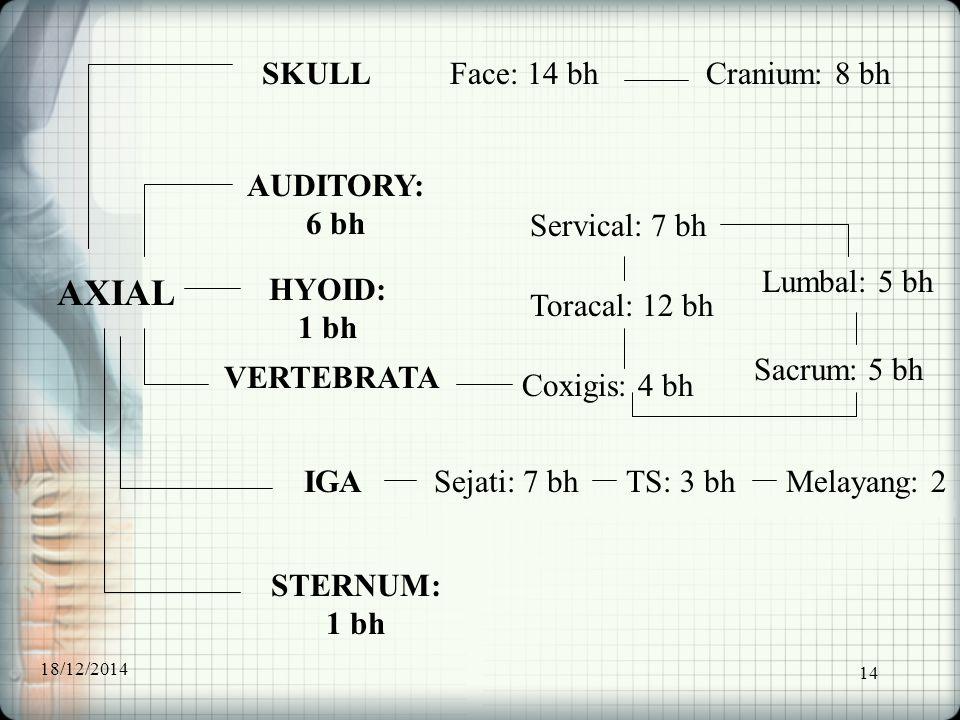 AXIAL SKULL Face: 14 bh Cranium: 8 bh AUDITORY: 6 bh Servical: 7 bh